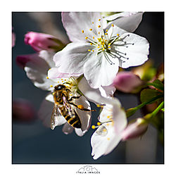 Bee_on_Flower_2-.JPG