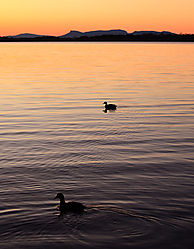 Belews_Ducks.jpg