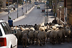 Bethlehem_Traffic_Jam.jpg