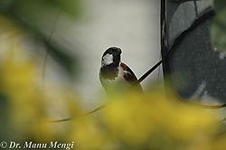 Bird-0063.jpg