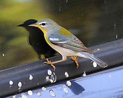 Bird-25.jpg