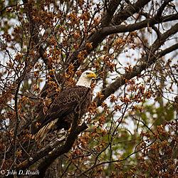 Bird_Photograph_on_the_James_River-11.jpg