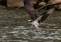 Bird_Photograph_on_the_James_River-73.jpg