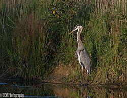 Bird_in_Spotlight.jpg