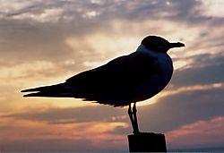 Bird_on_Pole.jpg