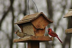 Birds-n-at_020.JPG