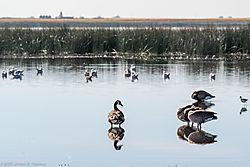 BirdsN-7565.jpg
