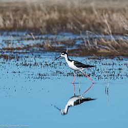 BirdsN-7597.jpg