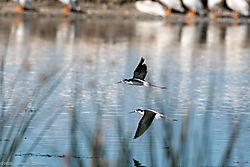 BirdsN-7642.jpg