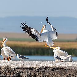 BirdsN-7812.jpg