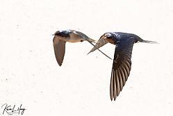 Birds_20210504-0006.jpg