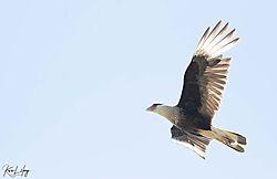 Birds_20210505-0026.jpg