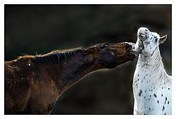 Bite-You.jpg