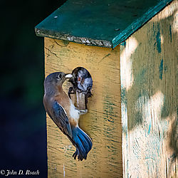 Blue_Bird_Fecal_Sac_Removal-1.jpg