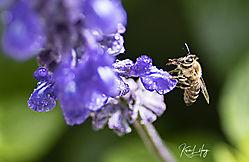 Botanical_20190413-0045.jpg
