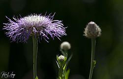 Botanical_20210507-0002.jpg