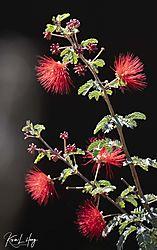 Botanical_20210507-0009.jpg