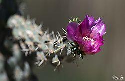 Botanical_20210507-0010.jpg