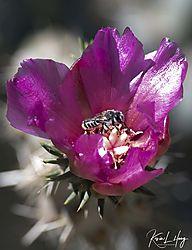 Botanical_20210507-0011.jpg