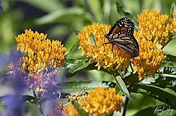 Botanical_20210507-0029.jpg