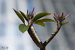Botanical_20210507-0039.jpg