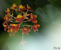 Botanical_20210507-0043.jpg