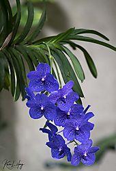Botanical_20210507-0047.jpg
