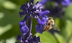 Botanical_20210507-0052.jpg