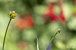 Botanical_20210507-0055.jpg