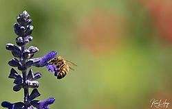 Botanical_20210507-0056.jpg