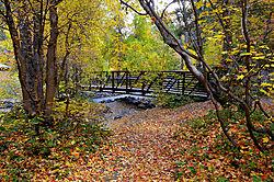 Bridge_Leaves1040.jpg