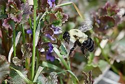 Bumblebee_01.jpg