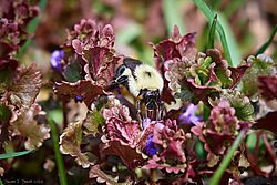Bumblebee_03.jpg