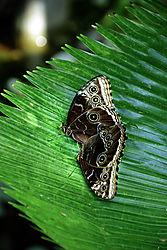 Butterflies_Omaha.jpg