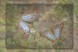 Butterflies_texture_copy.jpg