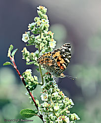 Butterfly-In-The-Grand-Canyon-PPW.jpg