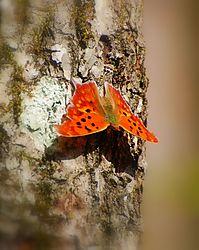 Butterfly16.jpg