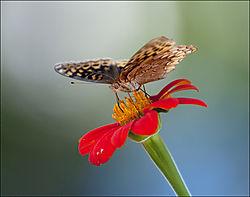 Butterfly53.jpg