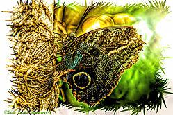 Butterfly59.jpg