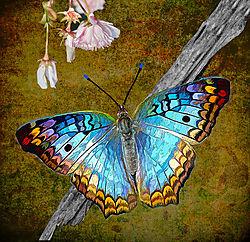 ButterflyAndFlower-900.jpg
