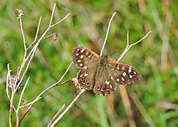 Butterfly_-_1.jpg
