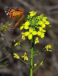 Butterfly_02_Adj_Rdcd.jpg