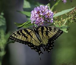 Butterfly_2_full_copy.jpg
