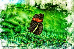 Butterfly_Explorer.jpg