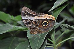 Butterfly_Garden_8.jpg