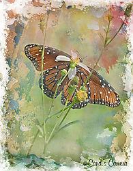 Butterfly_artsy.jpg