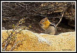CHIPMUNK_BOY-DATS-GOOOOD_06-01-19_PS-F.jpg