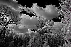 CLOUDS_and_TREES.jpg
