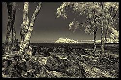 COCONUT_ISLAND_0650.jpg