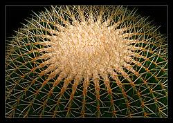 Cactus-Globe-b.jpg